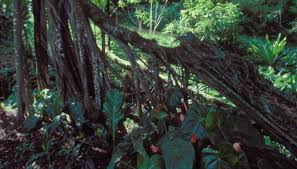 Dominant Plants Of The Tropical Rainforest - biotic factors of the rain forest sciencing