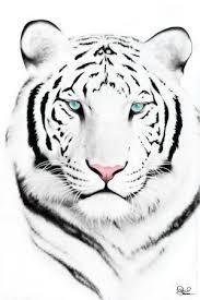 les 25 meilleures idées de la catégorie dessin tigre sur pinterest