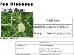 Common Plant Diseases - common plant diseases