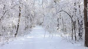 winter backgrounds nature gallery