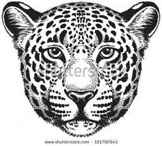 black white vector sketch leopards face stock vector 181792943