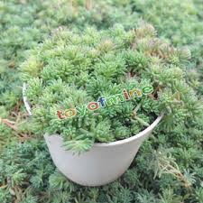 Cute Flower Pots by Online Buy Wholesale White Plastic Flower Pots From China White