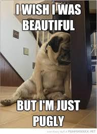 Depressed Pug Meme - 176 best pugs images on pinterest pug dogs baby