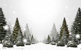 christmas backgrounds natural christmas background natural