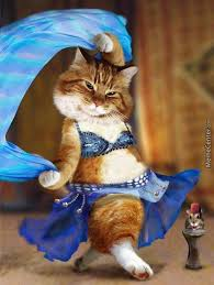 Belly Dance Meme - googled belly dancer cat wasn t disappointed by kalif meme center