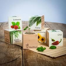 cadeau en bois pour femme ecocube plantes dans des cubes en bois