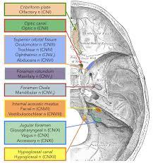 Nerves In The Knee Anatomy Summary Of The Cranial Nerves Teachmeanatomy