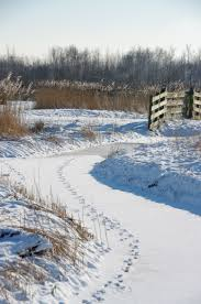 twiske netherlands favorite places pinterest winter