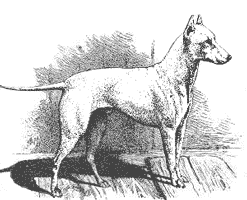 american pit bull terrier history american pit bull terrier history