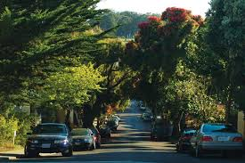 strolling san francisco with a special guidebook to trees
