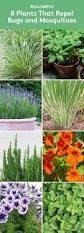 Plants To Keep In Bathroom Make Your Own Kitchen Garden With These Awesome Hacks Gardens