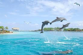 dolphin beach encounter anthony u0027s key resort roatan honduras
