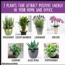 plants for office feng shui indoor plants that bring good luck feng shui