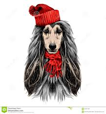 afghan hound dog images afghan hound dog stock illustrations u2013 105 afghan hound dog stock