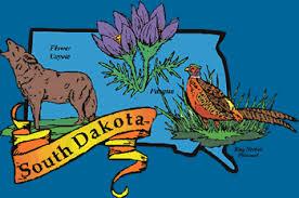 state bird of south dakota the 50 states south dakota teachersfirst