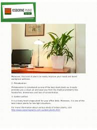 three desk plants for your workplace in australia pdf pdf archive