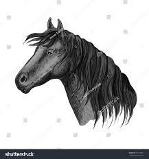 Black Mustang Horse Head Portrait Humble Black Mustang Stock Vector 507728551