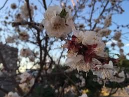 Flower Shops Las Cruces Nm - 48 best spring escapes images on pinterest cherry blossoms