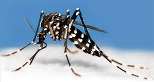 Mosquito Backyard Mosquitoes Bird Baths And Your Backyard The Backyard Naturalist