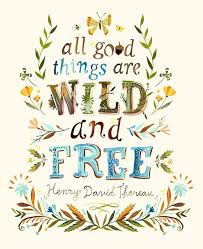 25 wild free ideas wild free quotes