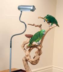 uv light for birds uv light importance in parrots my california macaws macaology