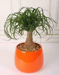 house plants that don t need light 10 houseplants that dont need sunlight houseplants peacocks indoor