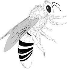 136 dessins de coloriage Insecte à imprimer