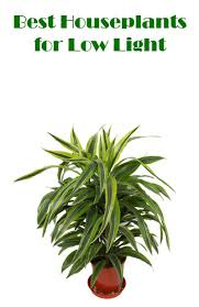 good houseplants for low light best houseplants for low light mom foodie