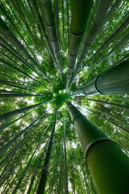 1467 best arbres images on pinterest nature traveling and beautiful