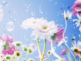 Flower Wallpaper Beautiful Flower Wallpaper