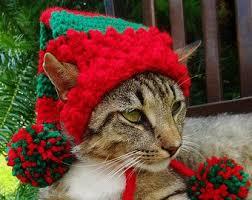Funny Halloween Costumes Cats 25 Dog Christmas Costumes Ideas Dog Christmas
