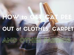 How To Remove Cat Hair From Clothes How To Get Cat Out Of Clothes Towels And Carpet Dengarden