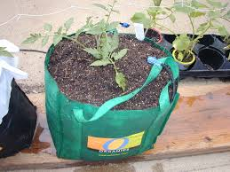 Buy Soil For Vegetable Garden by Global Buckets Grow Bags