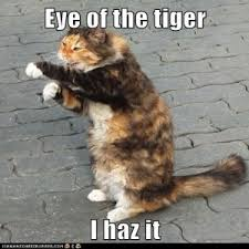 Eye Of The Tiger Meme - your best friend old me i run this mother