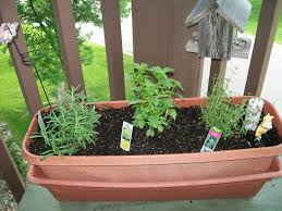kids gardening plant a patio herb garden with your kids two