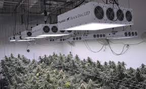 what are the best led grow lights for weed black dog led grow lights review are they worth your money in 2018