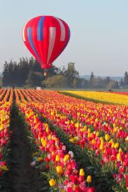 best 20 tulip ideas on pinterest purple tulips pink tulips and