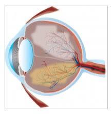 Anatomy Of The Eye Anatomy Of The Eye Lasik Provision