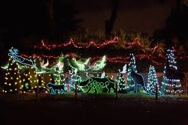christmas lights san francisco let the zoo light up your holidays