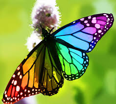 rainbow butterfly tattoo google search tattoos pinterest