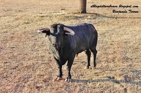el blog del toro bravo amanece en el palomar i