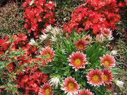 free images flower decoration orange red herb color botany