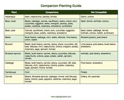 vegetable gardening resources veggie gardener