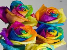 multicolored roses rainbow roses