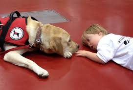autism service dog program provides support for our community