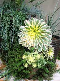 container plants ideas landscape contemporary with potted plants