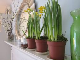interior beautiful indoor plant pots idea in small shape with