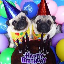 Birthday Pug Meme - 3538 best and they call it puggy love images on pinterest