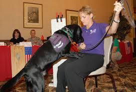 emotional support animals vs service dogs and therapy dogs esa
