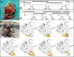 underwater bipedal locomotion by octopuses in disguise science